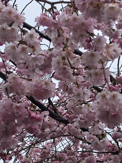 Spring_02