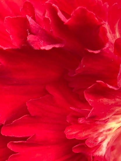 GardensByTheBay_092_FlowerDome_begonia