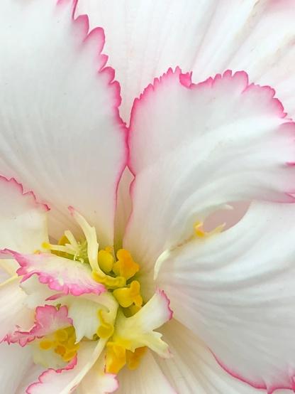 GardensByTheBay_095_FlowerDome_begonia