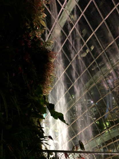 GardensByTheBay_17_CloudForest