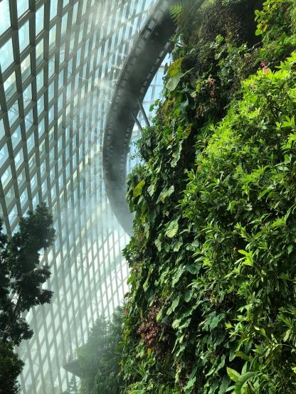 GardensByTheBay_24_CloudForest