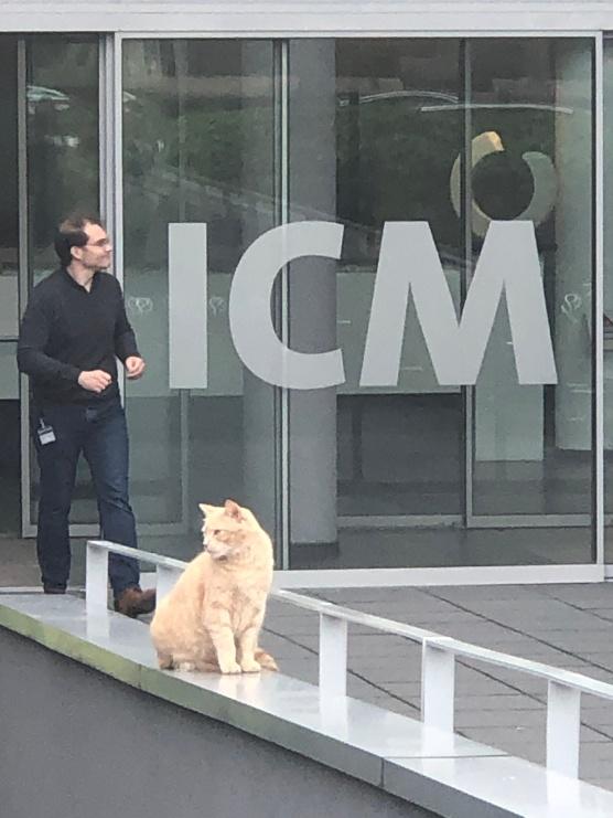 ICM_Cat1